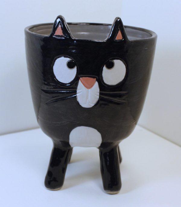 Kissa-kippo